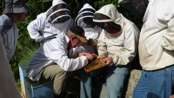 RIRDC-backed Bee Breeding Working Group