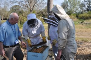 SMALL HIVE BEETLE RESEARCH PROJECT GETS RESULTS
