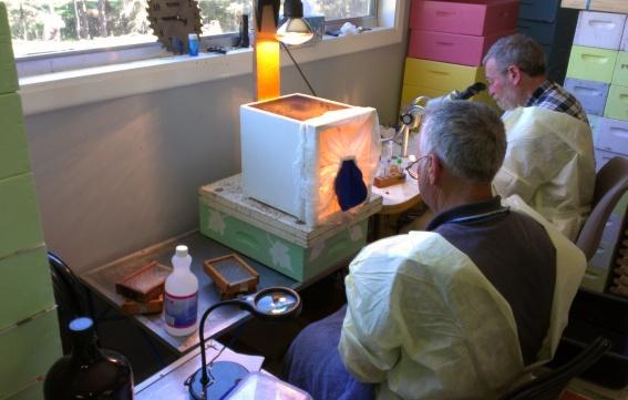 Ron Clark collects drone semen, in sterile conditions, under the watchful eye of queen breeder, Joe Horner.