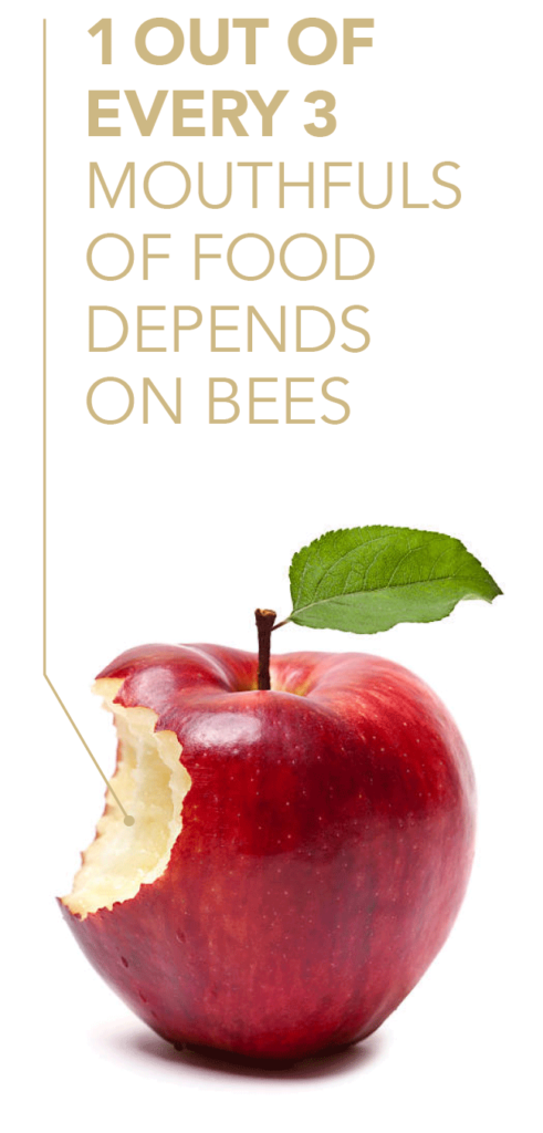 1 out of every 3 mouthfuls of food depends on bees.