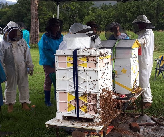 Hive Inspection (3)
