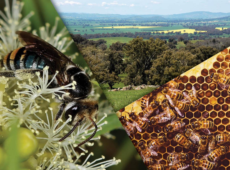 Powerful Pollinators
