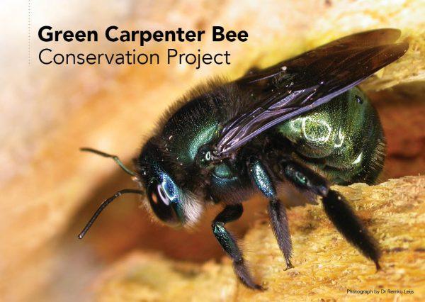 Green Carpenter Bee