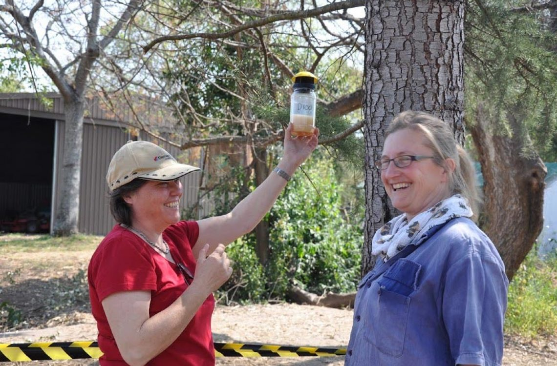 Left Sarah Bingham, HB volunteer and Right Sheila Stokes, President Hawkesbury Beekeepers inc setting SHB traps at WBF research apiary