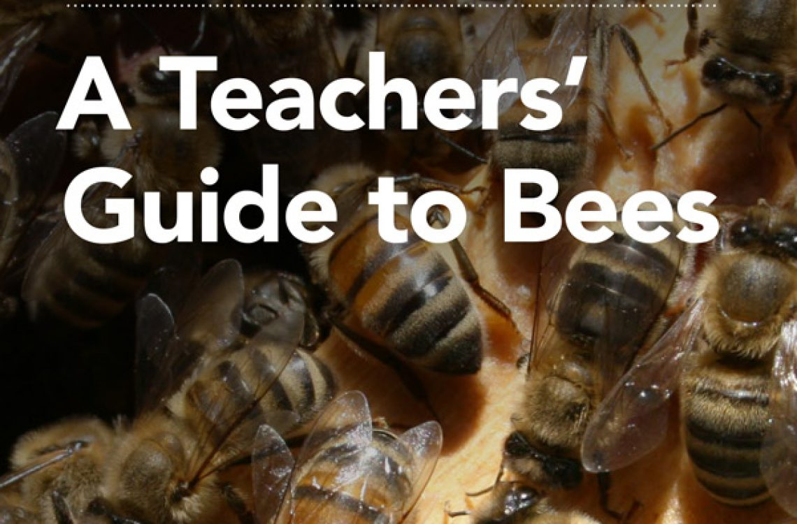 WBF034-Teachers'-Guide-to-Bees-V03-(2)-1